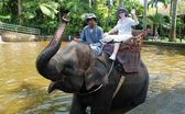 Elephant ride(Bali, Indonesia) — Stock Photo