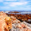 Rocks and ocean near Cape of Good Hope(South Africa) — Stock Photo