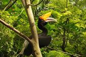 Hornbill in tropical rainforest, Indonesia. — Stock Photo