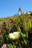 маяк и травы на мыс рока — Стоковое фото