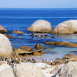 Rocks on Atlantic coast and penguins - Stock Photo