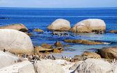 Stenar på atlantkusten och pingviner — Stockfoto
