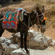 Typical greek donkey with multicolor saddle - Stock Photo