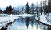 Winter pond — Stock Photo
