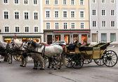 Salzburg satır atlar — Stok fotoğraf