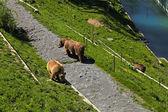 Brown bear in bear park , Bern, Switzerland. — Stock Photo