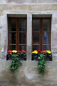 Two windows with flowers and window box — Stock Photo