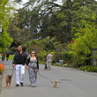 Stock Photo: Couple walking dogs