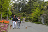 Couple walking dogs — Photo
