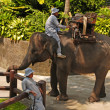 Stock Photo: Mahout and elephant at Elephant Safari Park,Bali