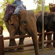 Постер, плакат: Mahout and elephant at The Elephant Safari Park Bali