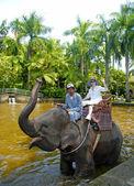 Elephant Safary Park in Bali. — Stock Photo
