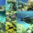 Coral and fish in the Red Sea, Egypt, Africa. — Stockfoto #47684851
