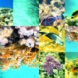 Coral and fish in the Red Sea, Egypt, Africa. — Stockfoto #48619245