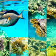 Coral and fish in the Red Sea, Egypt, Africa. — Stock Photo #48619249