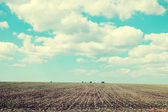 Agriculture field and blue sky — Stock Photo