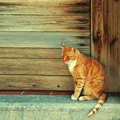 Red cat  in wood doorway (Crete, Greece) — Stock Photo