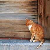 Red cat  in wood doorway, Greece — Stock Photo