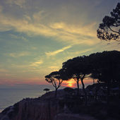 Seascape with silhouettes of pines and dramatic sunset — Stock Photo