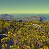 Table Mountain National Park, South Africa — Stock Photo