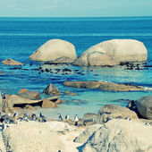 Beach of Atlantic Ocean (South Africa) with african penguins — Stock Photo