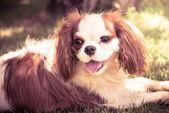Lindo perro al sol — Foto de Stock