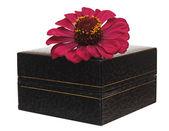 Gerbera piękny kwiat z pola prezenty — Zdjęcie stockowe