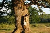 A giant oak — Stock Photo