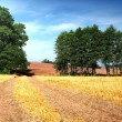 Stock Photo: Summer field and road