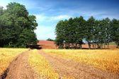 Sommaren sätter och road — Stockfoto