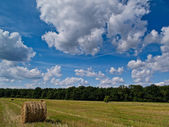 The field after harvest, Poland — Stock Photo