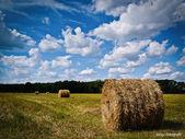 Dziedzinie świeżo bele siana — Zdjęcie stockowe