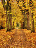 Autum in park Nieborow Palace, Poland — Stock Photo