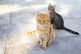 Two cats sitting on a stone terrace — 图库照片