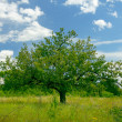 Separated tree in field of grass with cloudy sky — Stock Photo