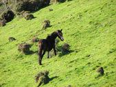 Wild horse — Stock fotografie