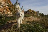 Lovely kitten — Stock Photo