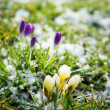 Stock Photo: Flowers Growing in Snow