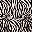Zebra Pattern — Stock Photo #23493695