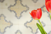 Beautiful red tulip flower — Stock Photo