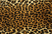 Leopard Spots — Stock Photo