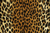 Black spots of a leopard  — Stock Photo