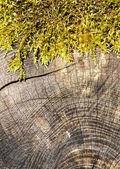 Cross section of a tree trunk — Stock Photo
