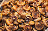 Lactarius deliciosus — Stock Photo