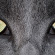 Cat Eyes — Stock Photo