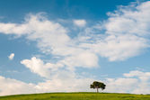 Pine on a hill — Stock Photo