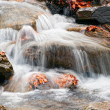 Detail of a river — Stock Photo