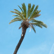 Detail of a palm — Stock Photo