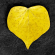 Stock Photo: Heart shaped leaf