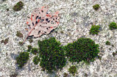 Moss on a rock — Stock Photo